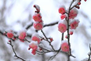 結婚したい!神奈川県の40代未婚女性様がご入会